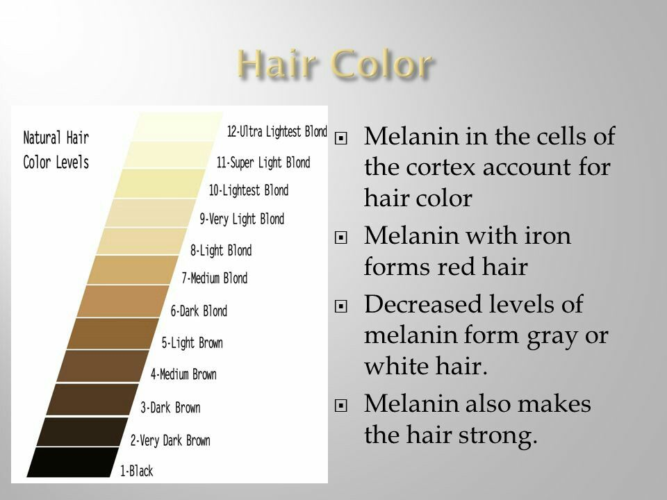 Melanated MEdia - Facts about Melanin